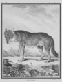 Le Loup - Wolf - Gallica - ark 12148-btv1b2300254t-f3.png