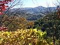 Leafy Frame - panoramio.jpg