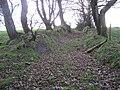 Leafy Lane between Errigle and Rarogan - geograph.org.uk - 1046859.jpg