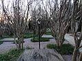 Leopard trees in garden.JPG