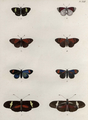 Lepidoptera-Humboldt-T042.png