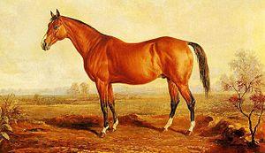 Lexington (horse) - Image: Lexington (USA)