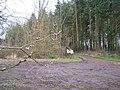 Ley Park - geograph.org.uk - 142505.jpg