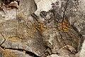 Lichen (42944773412).jpg