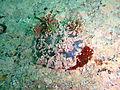 Limpet at Castle Rocks P7260856.JPG