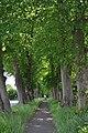 Lindenallee Borstel (Sülfeld).ajb.jpg