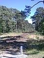 Linia kolejowa w kierunku Helu - panoramio.jpg