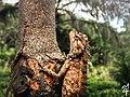 Lizard at Garden.jpg