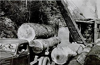 Unicoi Mountains - Logging operations in the Upper Tellico Valley in the 1930s