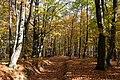 Loipersdorf Herbstwald 20181026 01.jpg