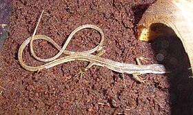 Cheap Snake Bedding