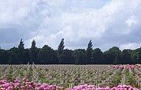 Lorrette Cemetery