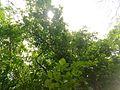 Love Green.jpg