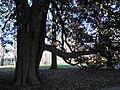 Lucy Cobb Instutute campus magnolia tree.jpg