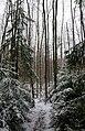 Luminen metsä Enäjärvi.JPG