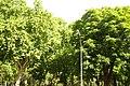 MADRID A.V.U. PASEO DEL PRADO-JARDINES - panoramio (21).jpg