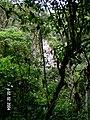 Machu Picchu - panoramio (48).jpg