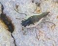 Macro-fly-20150801 0344.jpg