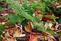 Macro-forest - West Virginia - ForestWander.jpg