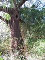 Magnolia Plantation and Gardens - Charleston, South Carolina (8556569154).jpg