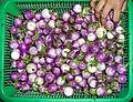 Makhuea - Thai eggplant.JPG