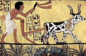Ancient Egyptian agriculture - Ploughing with a yoke of horned cattle in Ancient Egypt. Painting from the burial chamber of Sennedjem, c. 1200 BC