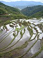 Maligcong rice terraces (3300107722).jpg