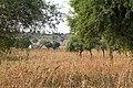 Mandawa-Millet field-2013107-12.jpg