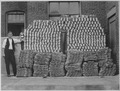 Manufacturing heavy wool socks for the Government at Chipman Knitting Mills, Easton, Pennsylvania. The finished product, - NARA - 533658.tif