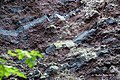 Maria Laach Abbey, Andernach 2015 - Laacher See DSC07556 (19775572669).jpg