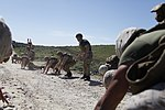 Marines Conduct Trilateral Training during Lisa Azul 150309-M-XZ244-027.jpg