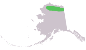 Description de l'image Marmota broweri range in ak.png.
