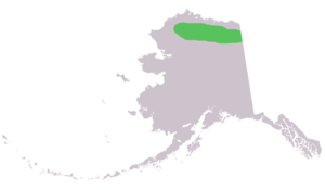 Alaska marmot - Image: Marmota broweri range in ak