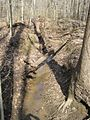 Meeman-Shelby Forest State Park Shelby County TN 2014-02-23 004.jpg
