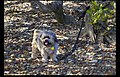 Mena blind and deaf likes waiting for photographer+ (8800836473).jpg
