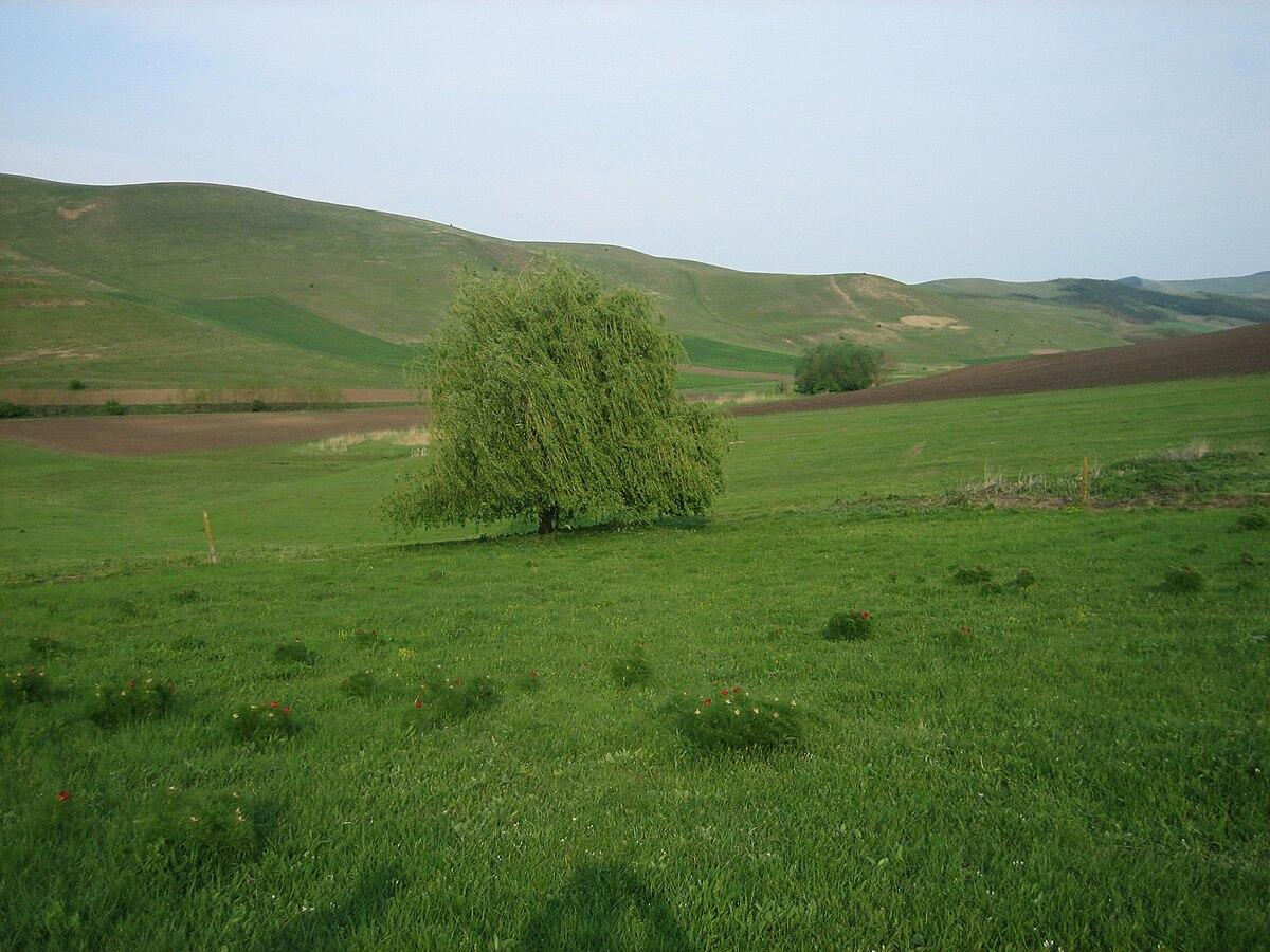 Mezőzáh.jpg