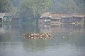 Migratory Birds - Santragachi Jheel - Howrah 2017-12-25 5643.JPG