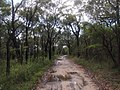 Milyerra Road Fire Trail - panoramio (3).jpg