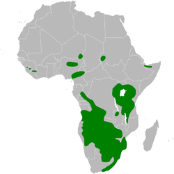 Mirafra africana distribution map.png