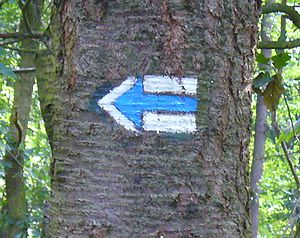 Trail blazing - Left Turn Marker on a blue marked trail in the Czech Republic