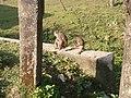 Monkey20161025 084706.jpg