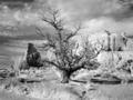 Monument Valley, Arizona LCCN2010630329.tif