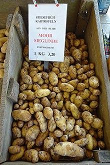 Kartoffelsorte Sieglinde