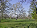 Morden a Spring on Cannon Hill Common geograph-2376611-by-Ben-Brooksbank.jpg