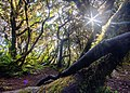 Mossy Forest of Dulang-dulang.jpg