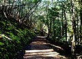 Mount Field National Park 08.jpg