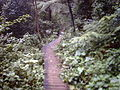 Mount Keira Ring Track.jpg
