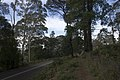 Mount Wilson NSW 2786, Australia - panoramio (42).jpg
