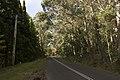 Mount Wilson NSW 2786, Australia - panoramio (61).jpg
