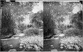 Mouth of Ashley Creek. Very beautiful spot. Old no. 73, 172, 349, 712, 356. - NARA - 517927.tif